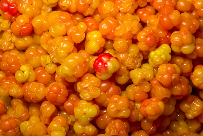 Close Up photo of a container full of cloudberries a.k.a. bakeapples in Newfoundland