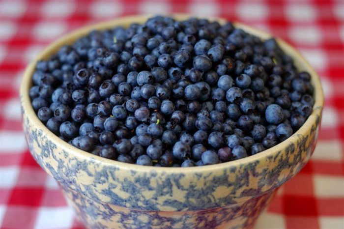 Blueberries Picked on Signal Hill