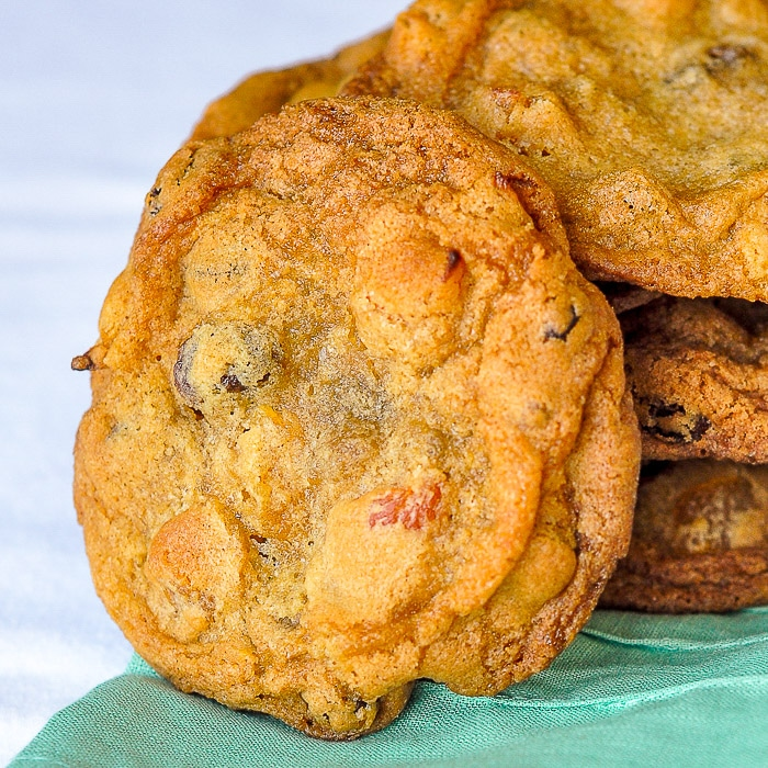Crispy Chewy Apricot Raisin Cookies close up photo of one cookie